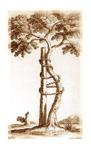 Gruppo Studio Posturologia Osteopatia e Chinesiologia rieducativa
