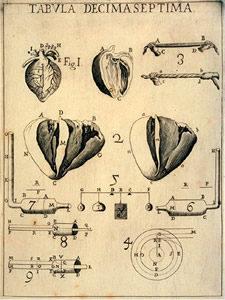 De Motu Animalium-Giovanni Borelli-Chinesiologia-iatromeccanica-biomeccanica-ginnastica correttiva-Prof. Carmelo Giuffrida-Catania-6