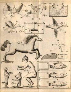 De Motu Animalium-Giovanni Borelli-Chinesiologia-iatromeccanica-biomeccanica-ginnastica correttiva-Prof. Carmelo Giuffrida-Catania-3