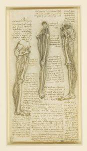 stabilità del ginocchio-ginocchio-Studio-Prof. Carmelo Giuffrida-Catania-3-immagine gratuita di proprietà della Royal Collection