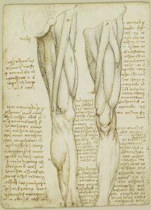 stabilità del ginocchio-ginocchio-Studio-Prof. Carmelo Giuffrida-Catania-1-immagine gratuita di proprietà della Royal Collection